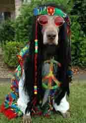 hippiedog-sm